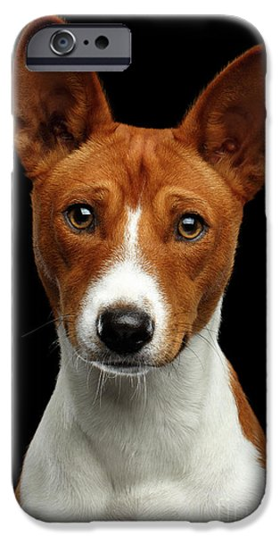 Pedigree White With Red Basenji Dog On Isolated Black Background IPhone 6s Case by Sergey Taran