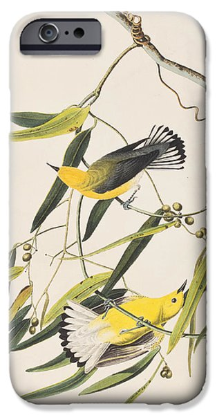 Prothonotary Warbler IPhone 6s Case by John James Audubon