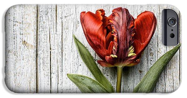 Tulip iPhone 6s Case - Tulip by Nailia Schwarz