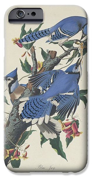 Blue Jay IPhone 6s Case by Anton Oreshkin
