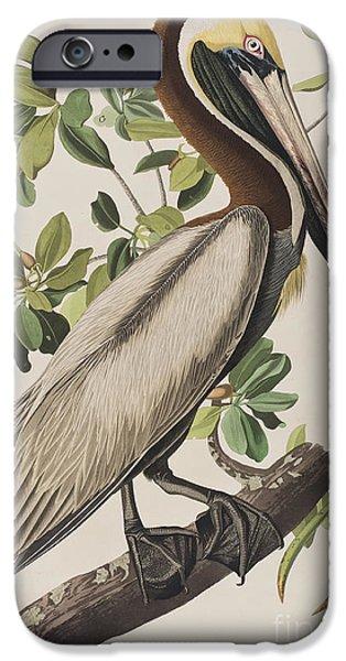 Brown Pelican  IPhone 6s Case