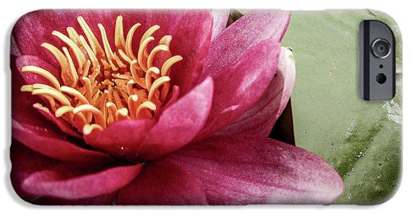 Lotus IPhone 6s Case