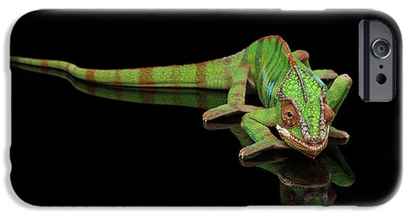 Sneaking Panther Chameleon, Reptile With Colorful Body On Black Mirror, Isolated Background IPhone 6s Case
