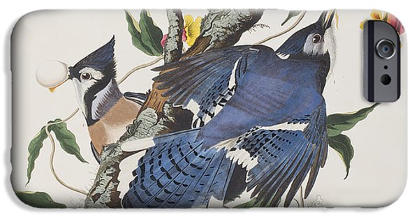 Blue Jay IPhone 6s Case by John James Audubon