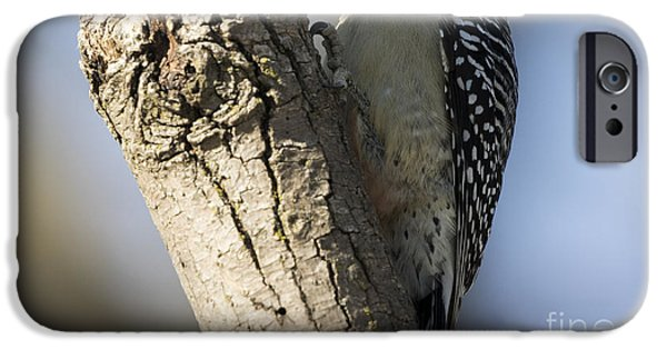 Red-bellied Woodpecker IPhone 6s Case by Ricky L Jones