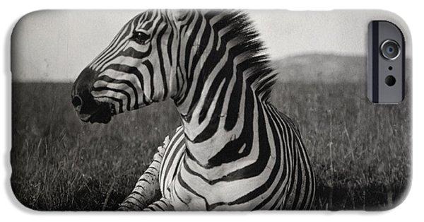 A Burchells Zebra At Rest IPhone 6s Case