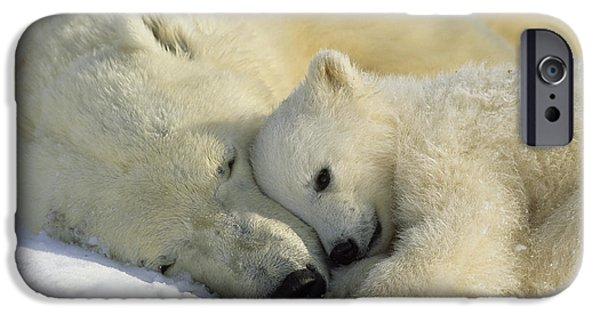 Polar Bear iPhone 6s Case - A Polar Bear And Her Cub Napping by Norbert Rosing