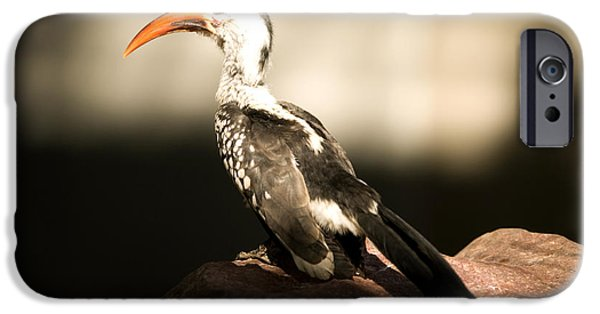A Red-billed Hornbill At The Lincoln IPhone 6s Case