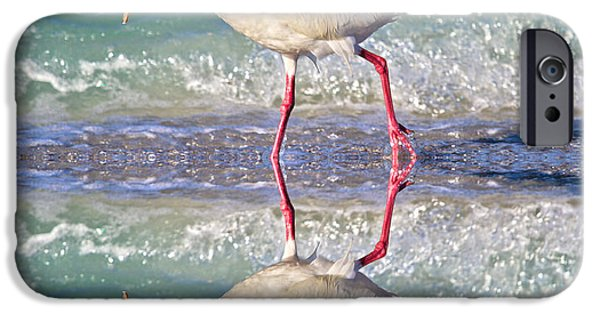Ibis iPhone 6s Case - A Reflective Walk by Betsy Knapp