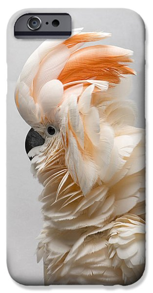 Cockatoo iPhone 6s Case - A Salmon-crested Cockatoo by Joel Sartore