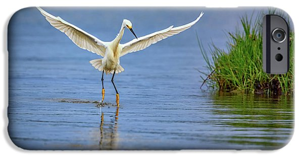 A Snowy Egret Dip-fishing IPhone 6s Case by Rick Berk