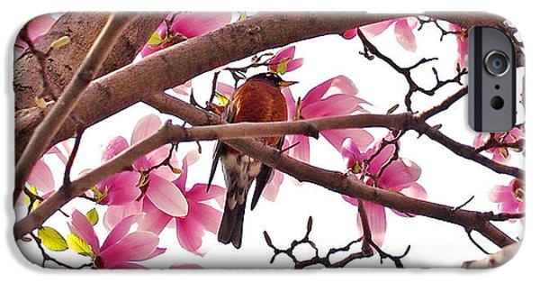 A Songbird In The Magnolia Tree - Square IPhone 6s Case