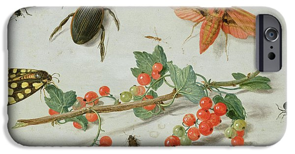 Magpies iPhone 6s Case - A Sprig Of Redcurrants With An Elephant Hawk Moth, A Magpie Moth And Other Insects, 1657 by Jan Van Kessel