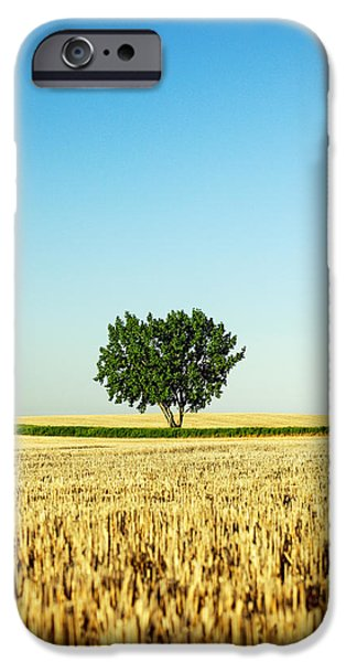 A Tree Stands Alone IPhone Case by Todd Klassy