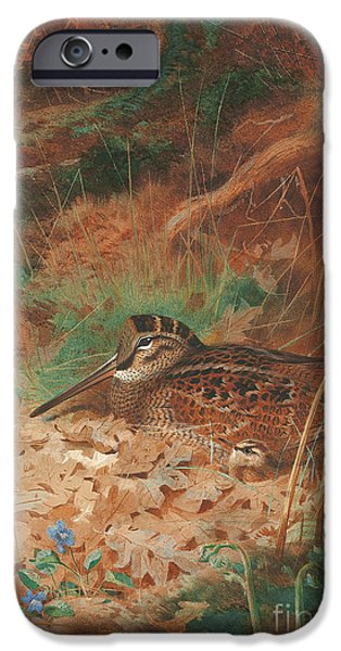 A Woodcock And Chick In Undergrowth IPhone 6s Case by Archibald Thorburn