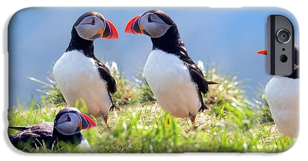 Puffin iPhone 6s Case - A World Of Puffins by Betsy Knapp