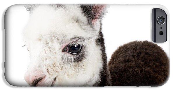 Adorable Baby Alpaca Cuteness IPhone 6s Case by TC Morgan