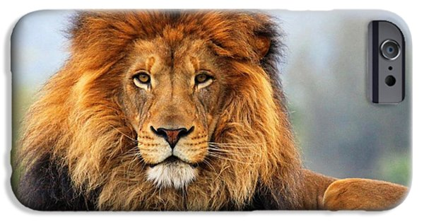 African Lion 1 IPhone 6s Case