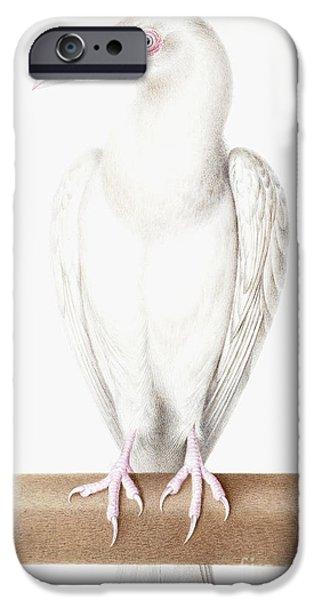 Albino Crow IPhone 6s Case by Nicolas Robert