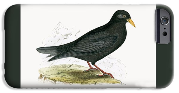 Alpine Chough IPhone 6s Case by English School