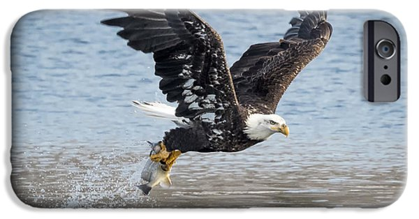 American Bald Eagle Taking Off IPhone 6s Case by Ricky L Jones