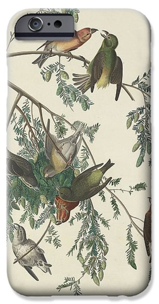 American Crossbill IPhone 6s Case