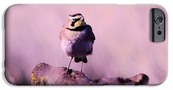 An Searching Gaze  IPhone 6s Case by Jeff Swan