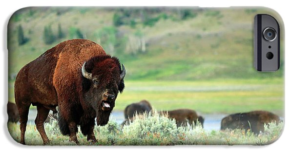 Angry Buffalo IPhone 6s Case by Todd Klassy