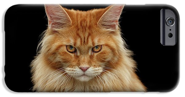 Cat iPhone 6s Case - Angry Ginger Maine Coon Cat Gazing On Black Background by Sergey Taran