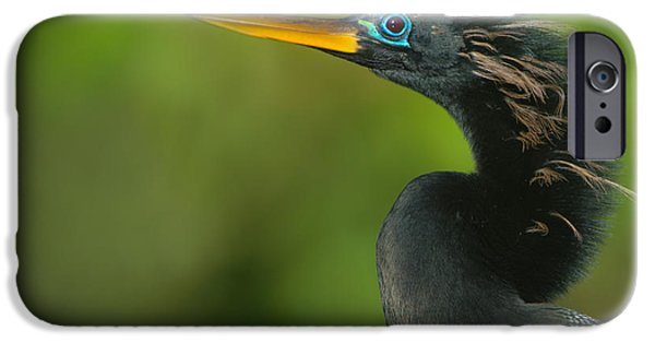Anhinga iPhone 6s Case - Anhinga Anhinga Anhinga, Tortuguero by Panoramic Images