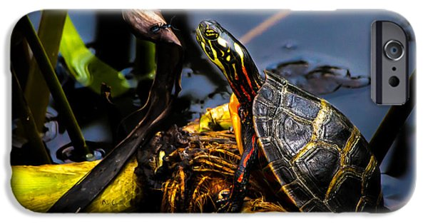 Ant Meets Turtle IPhone 6s Case by Bob Orsillo