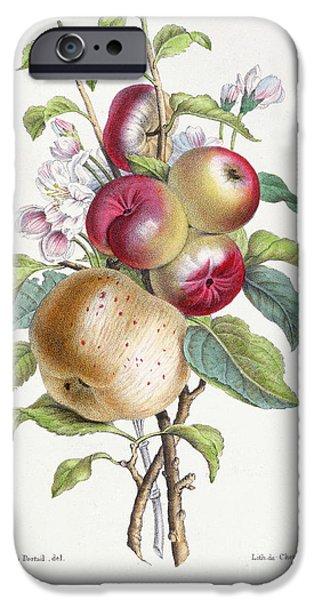 Apple Tree IPhone 6s Case by JB Pointel du Portail