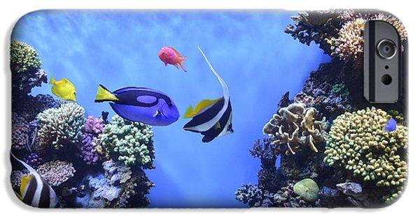 Scuba Diving iPhone 6s Case - Aquarium 2 by Barbara Snyder