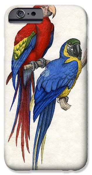Aracangua And Blue And Yellow Macaw IPhone 6s Case
