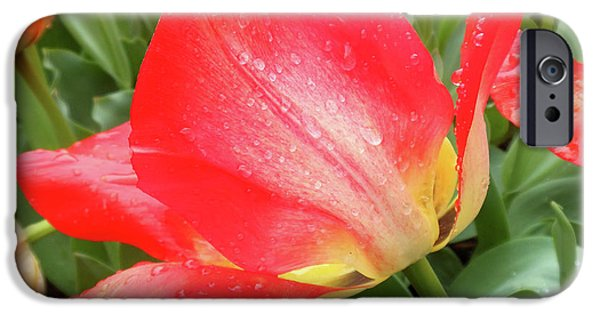 Sun Lights Tulips After Spring Rain IPhone 6s Case