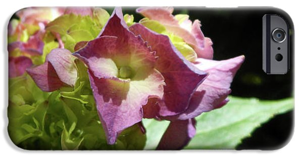 Hydrangea Flowers Fit For A Fairy IPhone 6s Case
