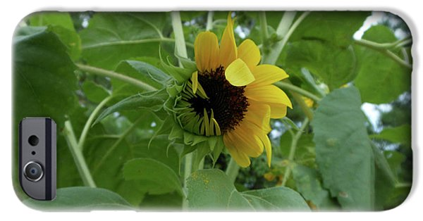 Sunflower Rising IPhone 6s Case