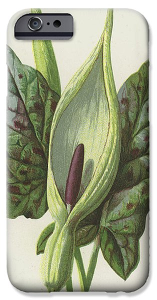 Cuckoo iPhone 6s Case - Arum, Cuckoo Pint by Frederick Edward Hulme