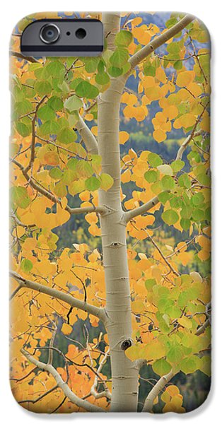 Aspen Watching You IPhone 6s Case by David Chandler