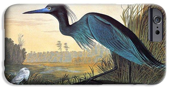 Audubon: Little Blue Heron IPhone 6s Case by Granger