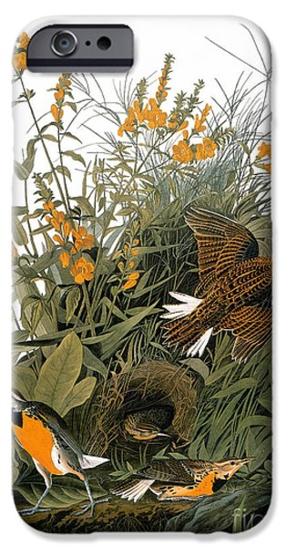Audubon: Meadowlark IPhone 6s Case