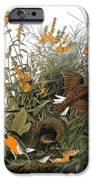 Audubon: Meadowlark IPhone 6s Case by Granger