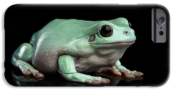 Australian Green Tree Frog, Or Litoria Caerulea Isolated Black Background IPhone 6s Case