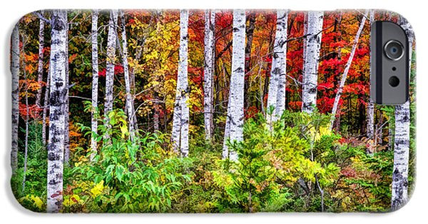 IPhone 6s Case featuring the painting Autumn Birches by Christopher Arndt