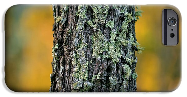 New Leaf iPhone 6s Case - Autumn Ironbark by Az Jackson