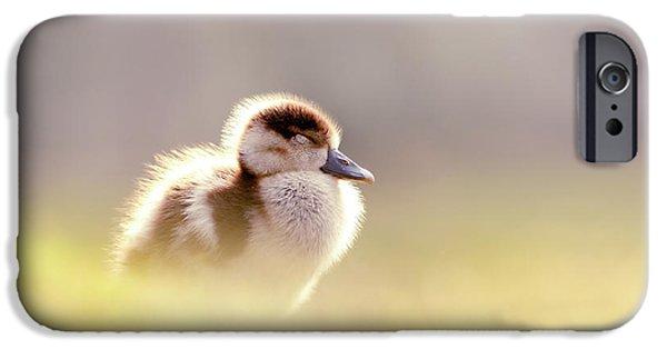 Gosling iPhone 6s Case - Baby Animals Series - Zen Gosling by Roeselien Raimond