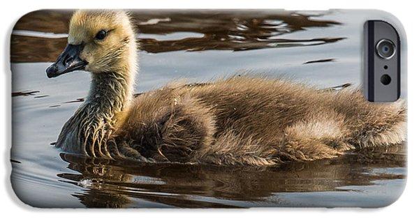 Gosling iPhone 6s Case - Baby Goose by Paul Freidlund