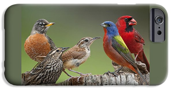 Backyard Buddies IPhone 6s Case