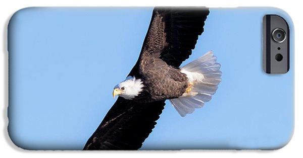 Bald Eagle Overhead  IPhone 6s Case