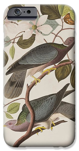 Pigeon iPhone 6s Case - Band-tailed Pigeon  by John James Audubon